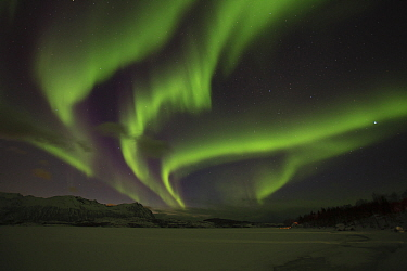 Northern lights above lake, Nordland, Norway