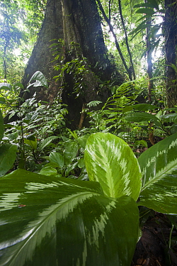 Rainforest, Tambopata National Reserve, Peru