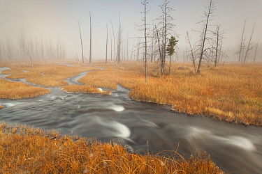River in mist, Yellowstone National Park, Wyoming
