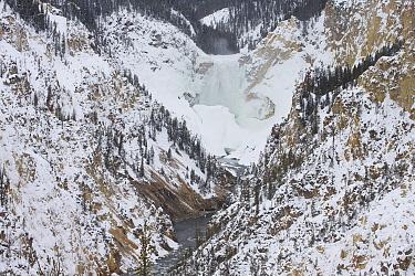 Lower Yellowstone Falls, Grand Canyon of Yellowstone, Yellowstone National Park, Wyoming
