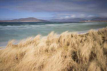 Grasses blowing in wind on beach, Outer Hebrides, Scotland