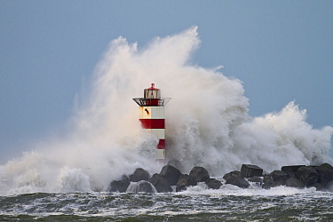 Lighthouse engulfed by wave during storm, Noord-Holland, Netherlands