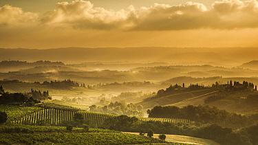 Misty sunrise near San Gimignano, Tuscany, Italy