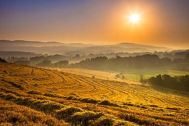 Field in on foggy morning, Val de Cecina, Tuscany, Italy