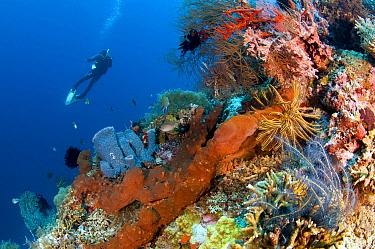 Coral reef and diver, Menjangan Island, Bali, Indonesia