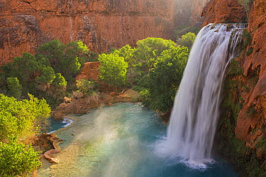 Havasu Falls, Havasupai Indian Reservation,Grand Canyon National Park, Arizona  -  Jeff Foott