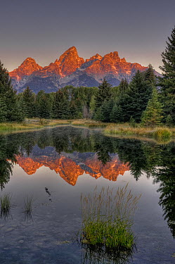 Mountains reflected in pond, Grand Tetons, Grand Teton National Park, Wyoming  -  Jeff Foott