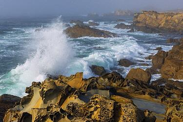 Waves breaking, Salt Point State Park, California  -  Jeff Foott