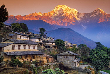 Ghangdrung village with Annapurna South, at 7219 metres, covered in fresh winter snow, Annapurna Conservation Area, Nepal  -  Colin Monteath, Hedgehog House