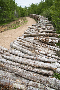 Log pile, Maine
