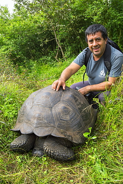 El Fatal Giant Tortoise (Chelonoidis sp), a newly described species, with Wacho Tapia, the director of the Giant Tortoise Restoration Initiative and co-author of the new species description, Cerro Mes...