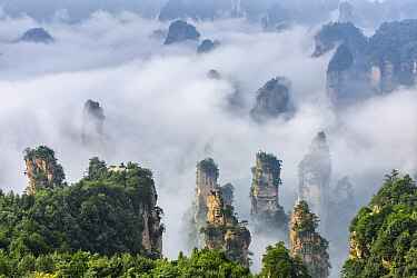 Quartz and sandstone pillars with clouds, Zhangjiajie National Forest Park, Hunan,China