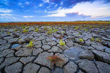 Mud flat at low tide, Oosterschelde National Park, Netherlands