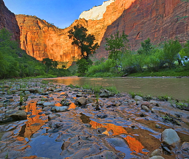 Reflections in Virgin River after flooding, Zion National Park, Utah