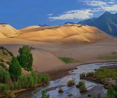 Sand Creek, Great Sand Dunes National Park, Colorado