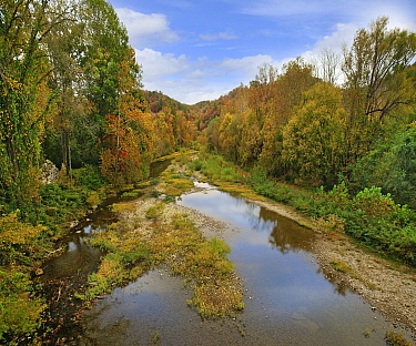 Deciduous forest and river in fall, Little Buffalo River, Buffalo National River, Arkansas