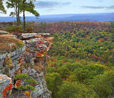 Deciduous forest and cliff in fall, Petit Jean State Park, Arkansas
