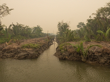 Irrigation channel through oil palm plantation in dense haze caused by fire, set by humans to clear rainforest, Sekonyer RIver, Tanung Puting National Park, Central Kalimantan, Borneo, Indonesia. Octo...