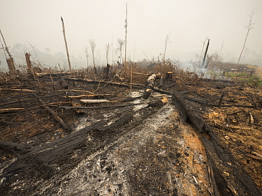 Smoking fire, set by humans to clear rainforest to plant oil palms, Central Kalimantan, Borneo, Indonesia. October, 2015