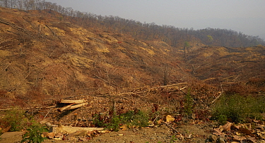 Clearcut timber clearing in foothills, Myannmar