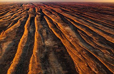 Parallel sand dunes in desert, Simpson Desert, Northern Territory, Australia