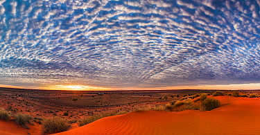 Sand dune at sunrise, Simpson Desert, Northern Territory, Australia