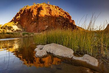 Sunset on cliff and billabong, Finke River, Glen Helen Gorge, MacDonnell Ranges, Northern Territory, Australia