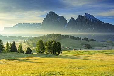 Alpine flowers and trees, Sasso Lungo and Sasso Platto, Trentino, Italy  -  Ronald Camphius