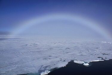 Fogbow over pack ice, Spitsbergen Island, Svalbard, Norway