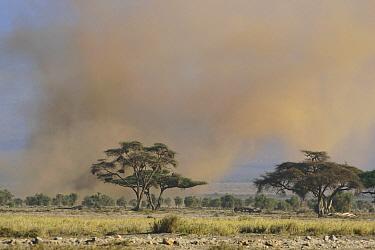Sandstorm over the savannah, Amboseli National Park, Kenya