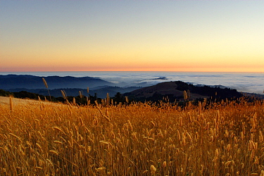 Grassland on coast at sunset, Russian Ridge Open Space Preserve, Bay Area, California
