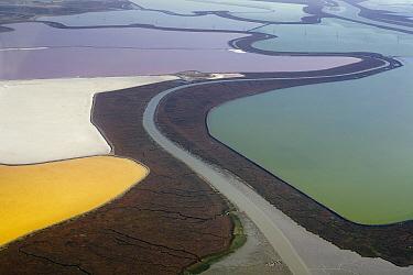 Tidal channel with sliver of remaining salt marsh between salt ponds, Fremont, Bay Area, California