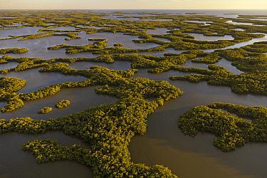 Mangrove (Avicennia sp) islands, Ten Thousand Islands, Everglades National Park, Florida