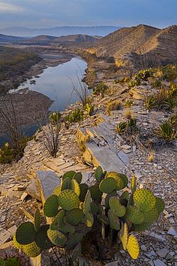 Cactus and Rio Grande, Big Bend National Park, Texas