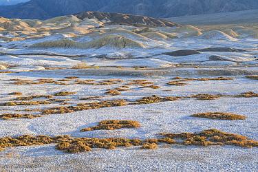 Salt deposits, Salt Creek Trail, Death Valley National Park, California