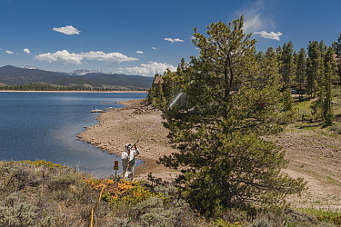 Mountain Pine Beetle (Dendroctonus ponderosae) prevention by spraying pesticides, Grand Lake, Colorado