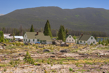 Mountain Pine Beetle (Dendroctonus ponderosae) area, killed trees near homes have been removed, Colorado