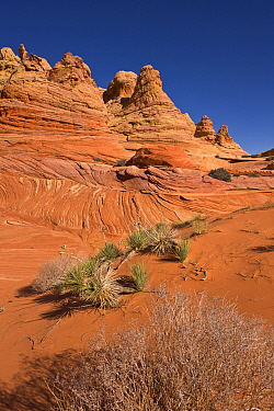 Sandstone rock formations, Vermilion Cliffs National Monument, Colorado Plateau, Utah