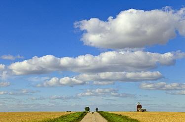 Dirt road and old grain elevator, Williston Basin, North Dakota