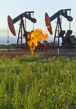 Pumpjacks working with flames flaring from excess natural gas, Williston Basin, North Dakota