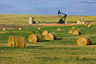 Pumpjack surrounded by farm fields, Williston Basin, North Dakota
