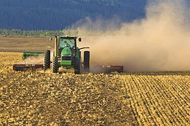 Wheat (Triticum sp) field being plowed, Idaho