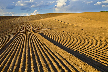Wheat (Triticum sp) plowed fields, Idaho