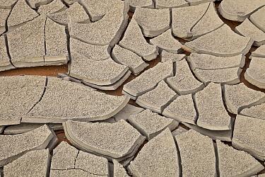 Dry cracked mud on river bank in desert, San Juan River, Utah