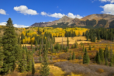 Fall colors in mountain meadow, Rocky Mountains, Colorado