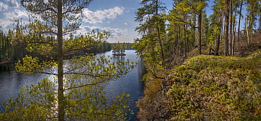 Shoreline, Discovery Lake, Boundary Waters Canoe Area Wilderness, Minnesota