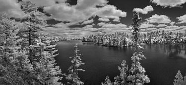 Forest on lake shore, Judd Lake, Superior National Forest, Minnesota