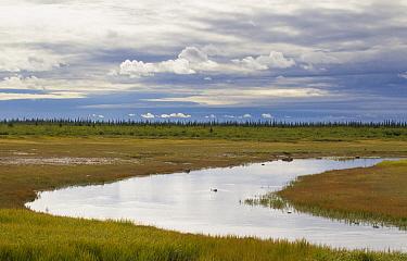 Coastal flats in front of taiga treeline, Hudson Bay, Manitoba, Canada