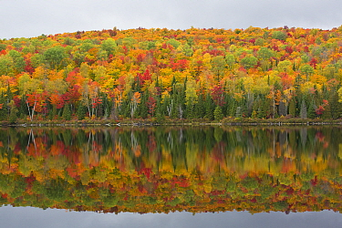Forest along lake in autumn, Laurentian Mountains, La Mauricie National Park, Quebec, Canada