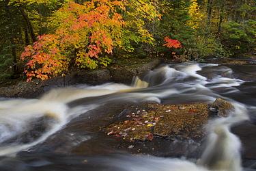 Fall colors along creek, Laurentian Mountains, La Mauricie National Park, Quebec, Canada
